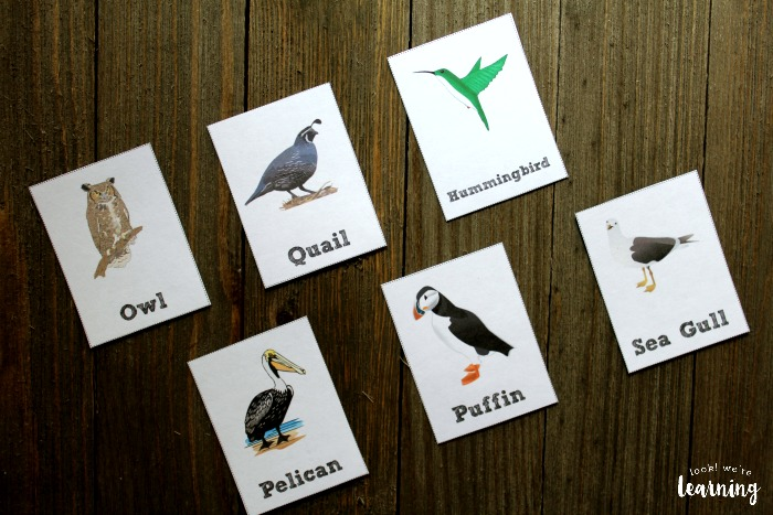 Bird Flashcards for Kids to Use