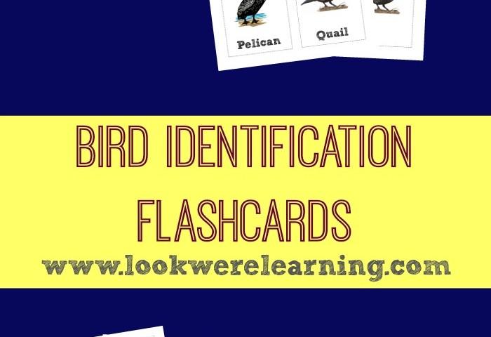 Printable Bird Identification Flashcards