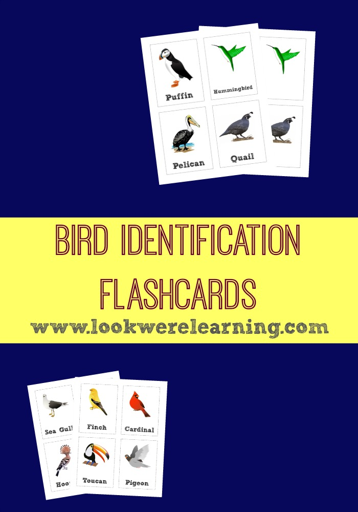 Bird Identification Flashcards