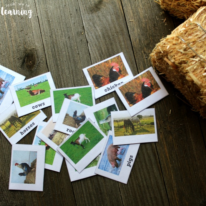 Farm Animal Identification Flashcards