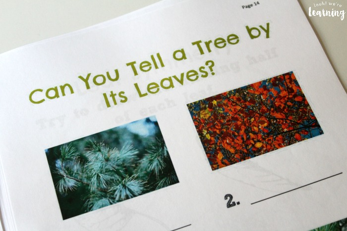 How to Identify Leaves Printable Activity