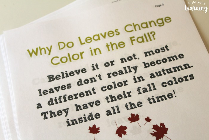 Learning About How Leaves Change Color