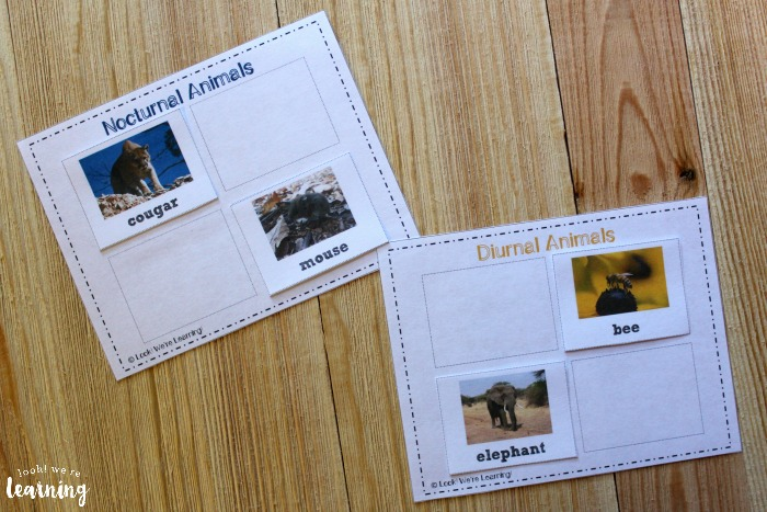 Nocturnal and Diurnal Animal Sorting Activity for Kids