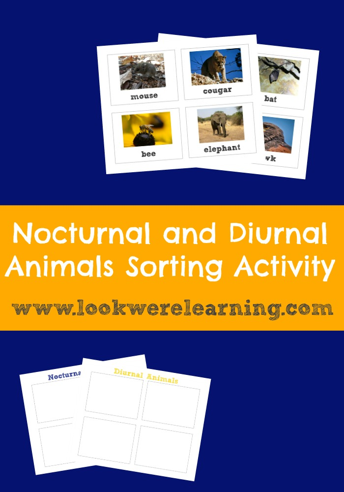 Nocturnal and Diurnal Animals Sorting Activity - Look! We're Learning!