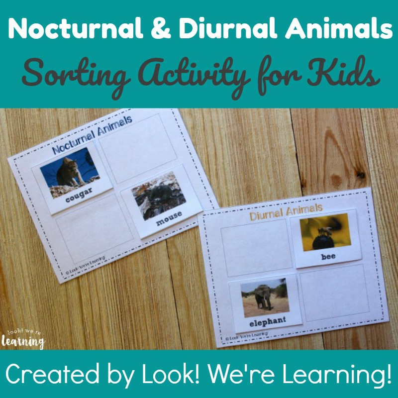 Nocturnal and Diurnal Animals Sorting