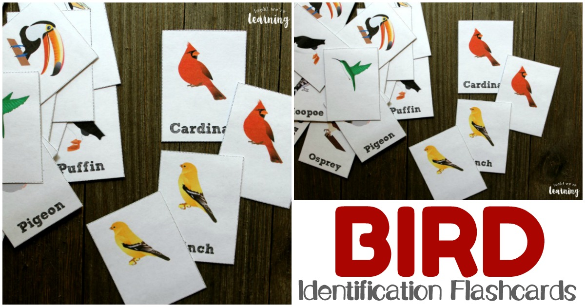 Printable Bird Flashcards for Common Species