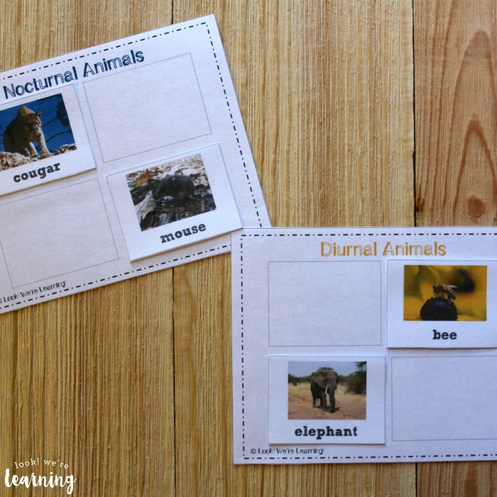 Printable Nocturnal Animal Sorting Activity