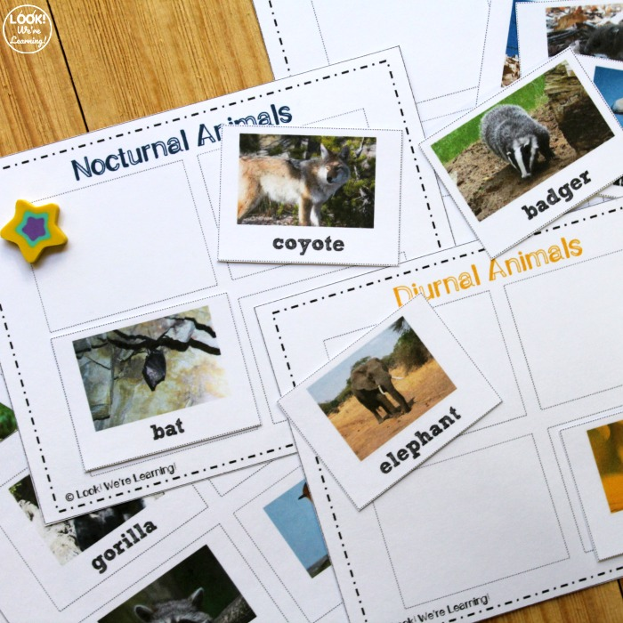 Printable Nocturnal Animals Sorting Lesson for Kids