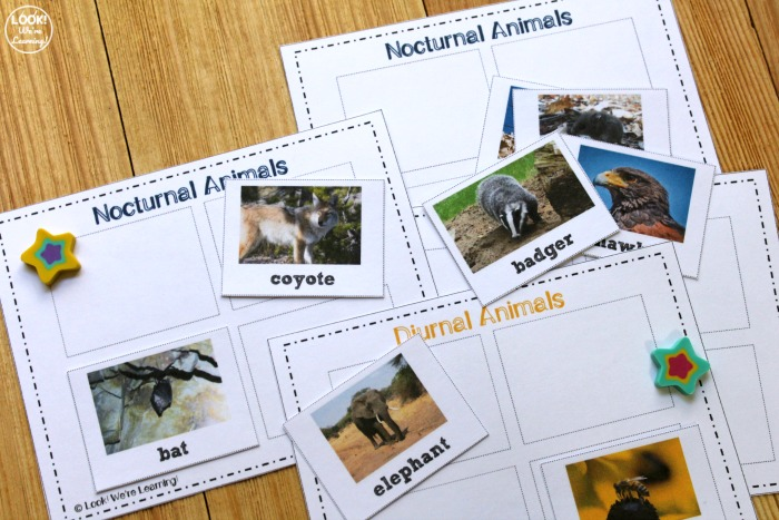 Printable Nocturnal and Diurnal Animal Sorting Lesson