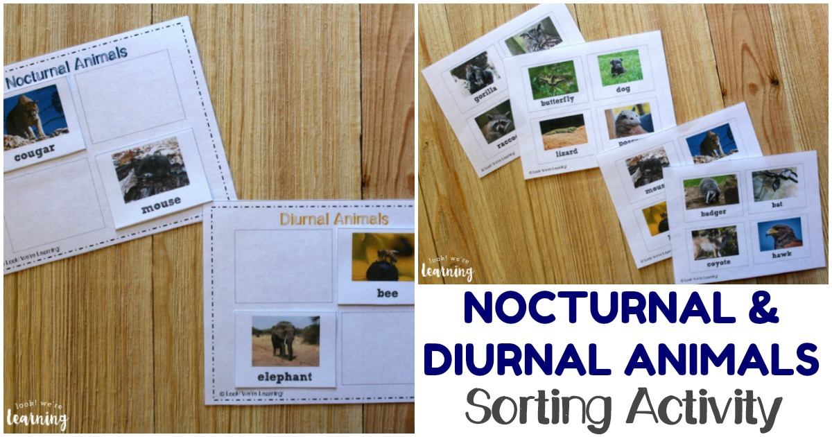 Printable Nocturnal and Diurnal Animals Sorting Activity for Kids