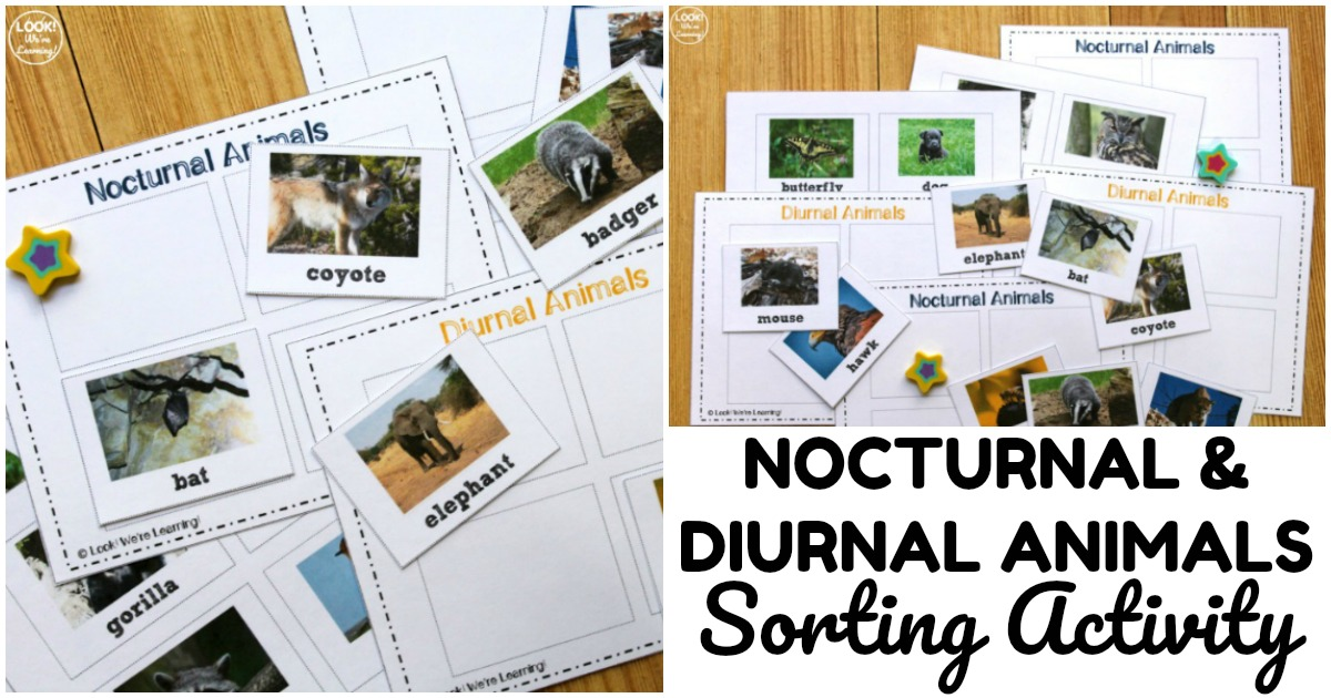Simple Nocturnal and Diurnal Animals Sorting Activity