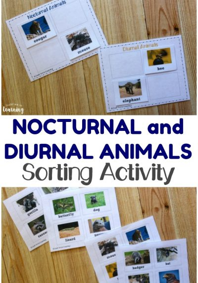 Teach kids about the animals who are active during the day and those that come out at night with this fun nocturnal and diurnal animals sorting activity!