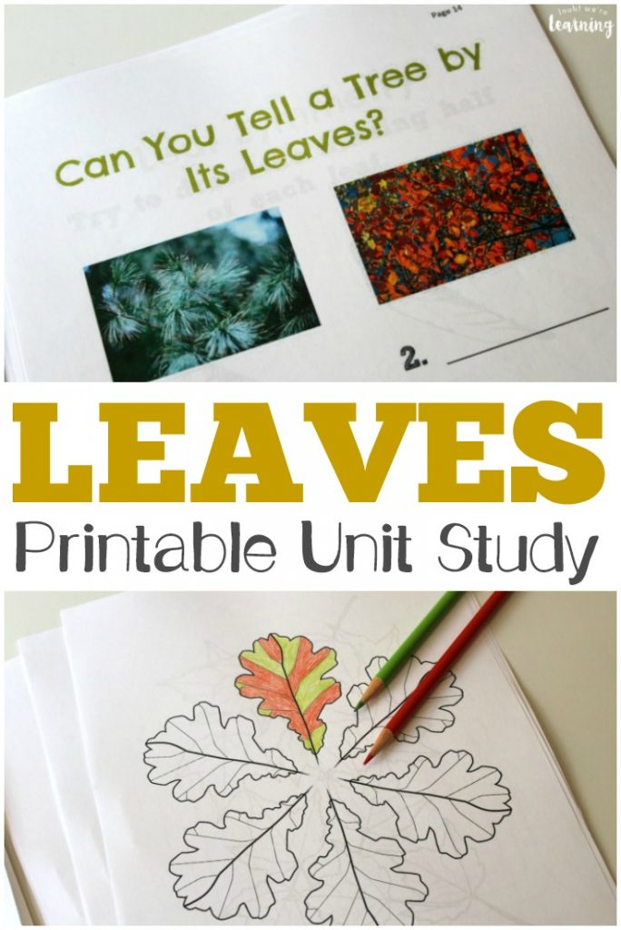 This All About Leaves Printable Unit Study is a perfect way to study the science of fall foliage with kids!