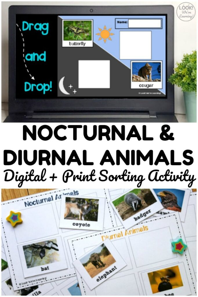 Use the print or digital version of this nocturnal and diurnal animals sorting activity to teach students about animal sleep habits!