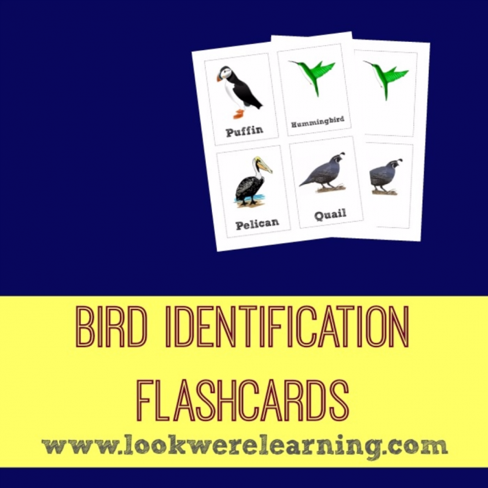 Bird Identification Flashcards - Look! We're Learning!