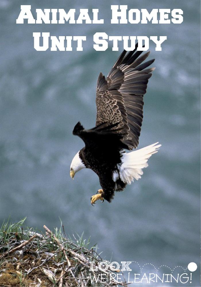Homeschool Unit Studies: Animal Homes Unit Study