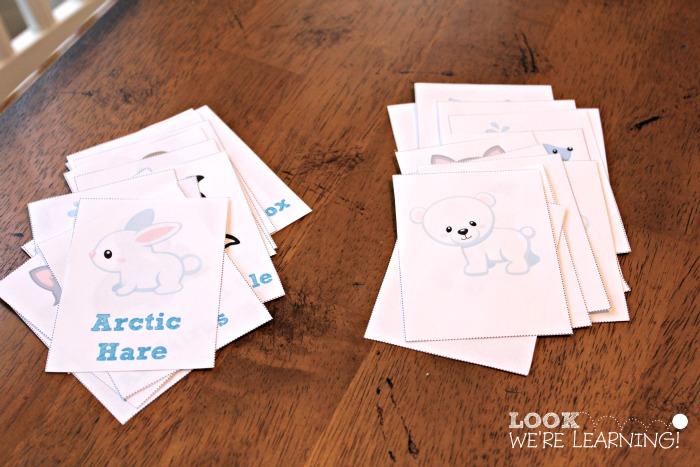 Polar Animal Patterns