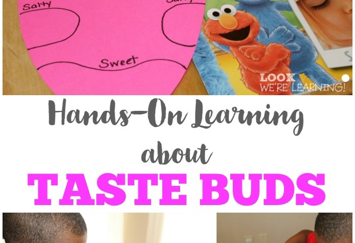 Hands-On Learning about Taste Buds