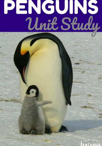 Learn about the cuddly babies and caring parents that make up penguin colonies in this penguins unit study! There are penguin facts for kids, penguin books, penguin crafts, and more to explore!
