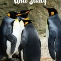 Penguins Unit Study
