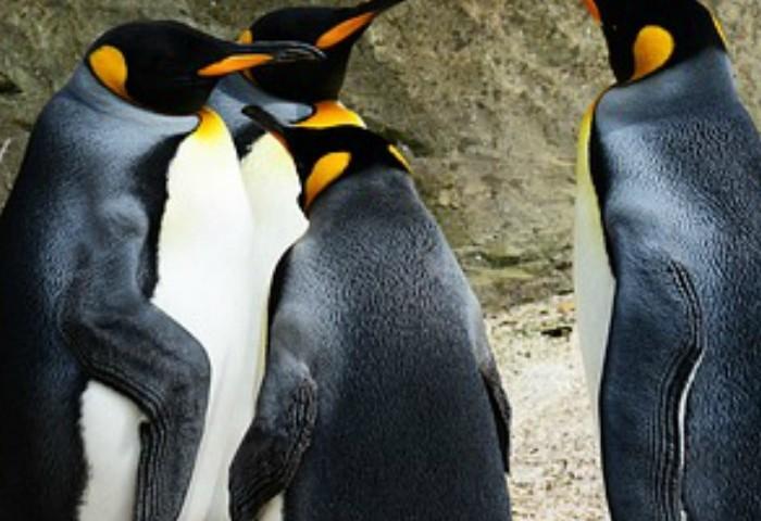 Homeschool Unit Studies: Penguins Unit Study