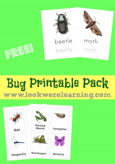 Free Bug Printables Pack