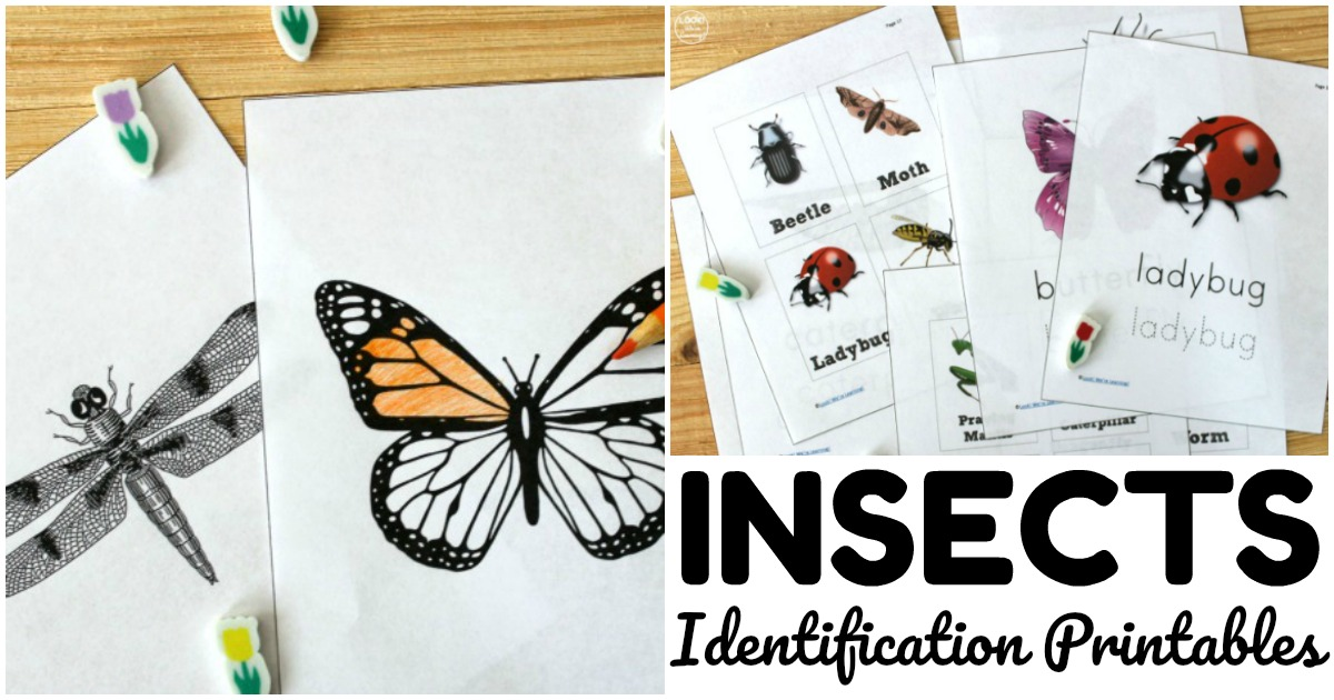 Fun Bug Identification Printables for Kids