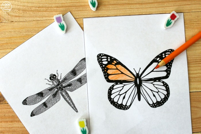 Printable Bug Coloring Sheets for Kids