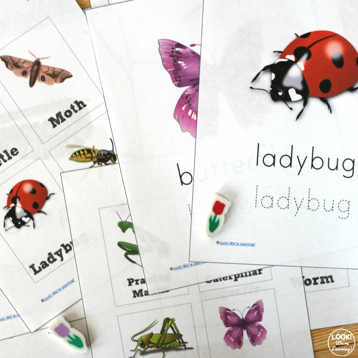 Printable Bug Identification Lesson for Kids