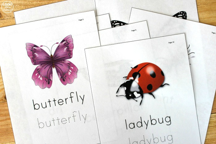 Printable Bug Identification Worksheets