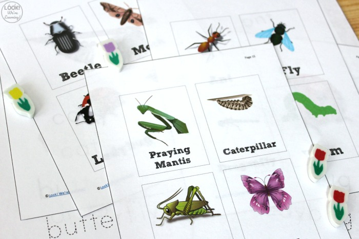 Printable Insect Identification Cards for Kids