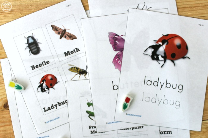 Printable Insect Identification Worksheets for Kids