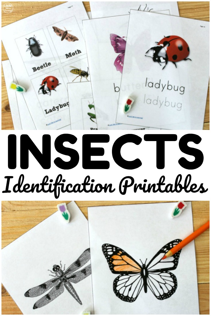 These bug identification printables are so fun for teaching kids about common insect species in the neighborhood!