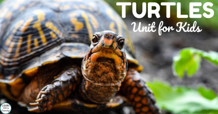Simple Turtles Unit Study for Kids
