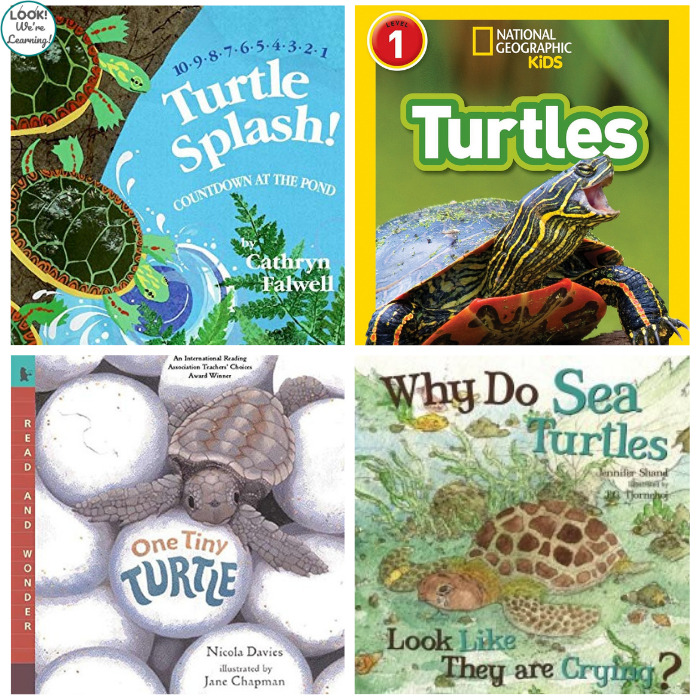 Turtle Books for Kids to Read
