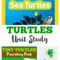 Turtles Unit Study
