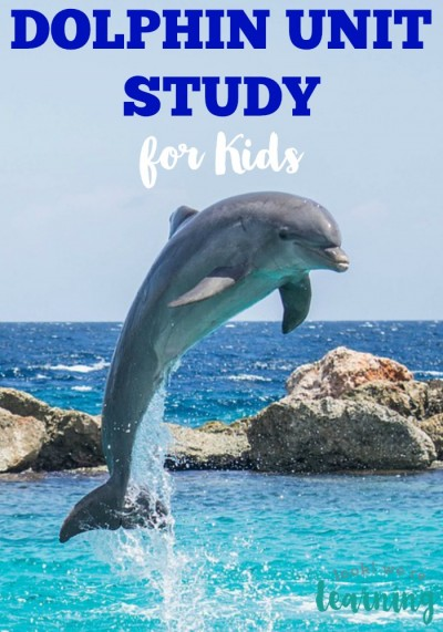 Dolphin Facts for Kids
