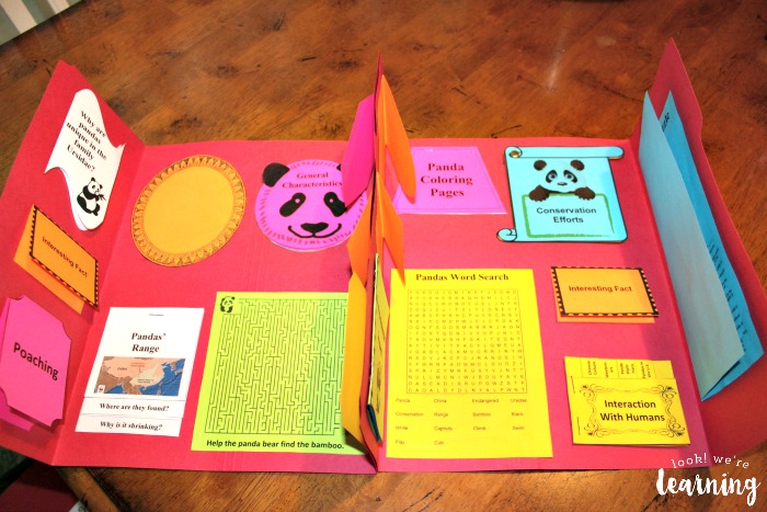 Giant Panda Lapbook Layout
