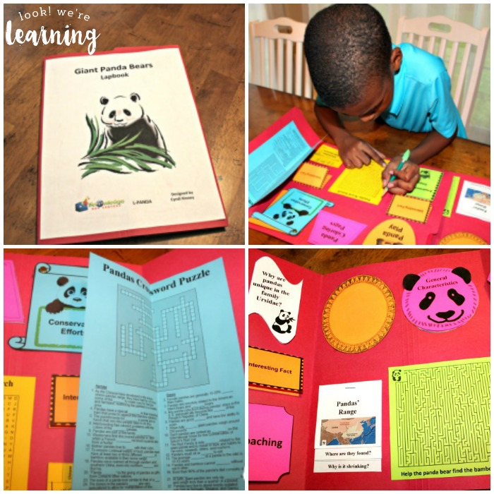 Learning about Giant Pandas with Lapbooks