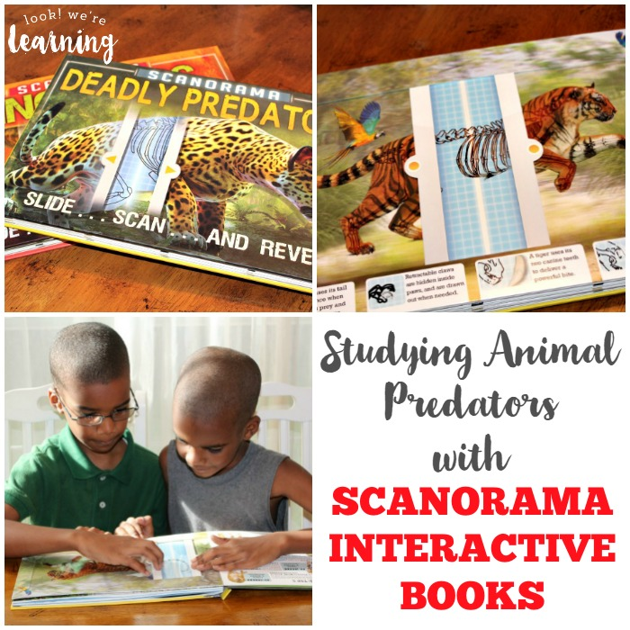 Reading about Animal Predators with Scanorama Interactive Books