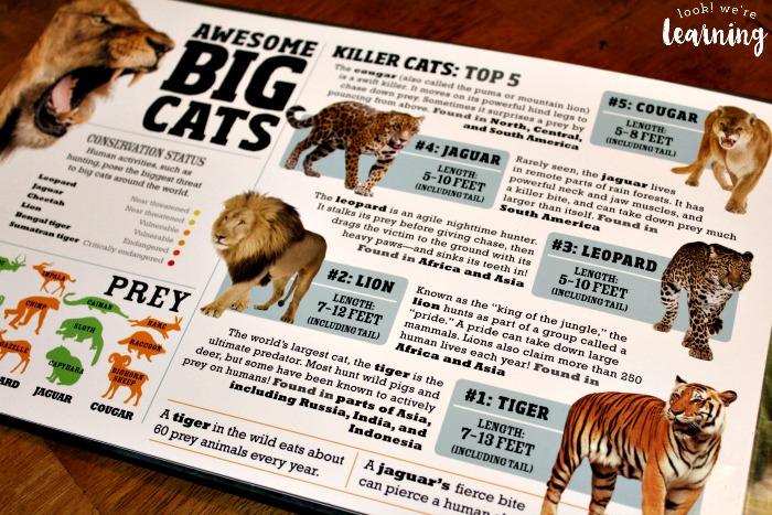 Reading about Big Cats