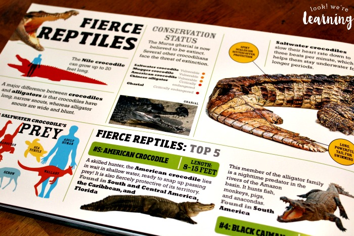 Reading about Fierce Reptiles