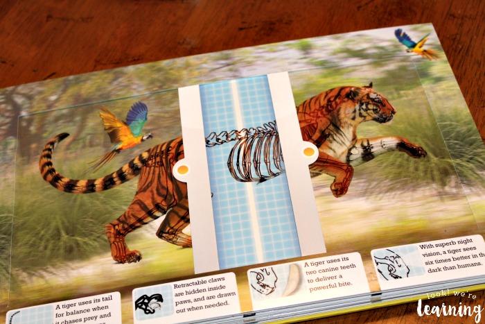 Scanning Tiger Vertebrae