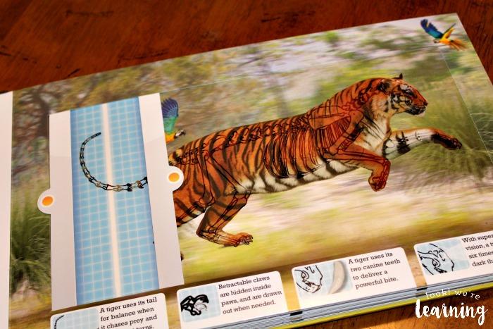 Studying Tiger Bones