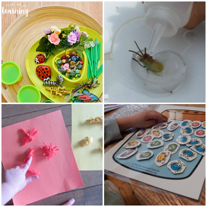 Hands On Insect Activities for Kids