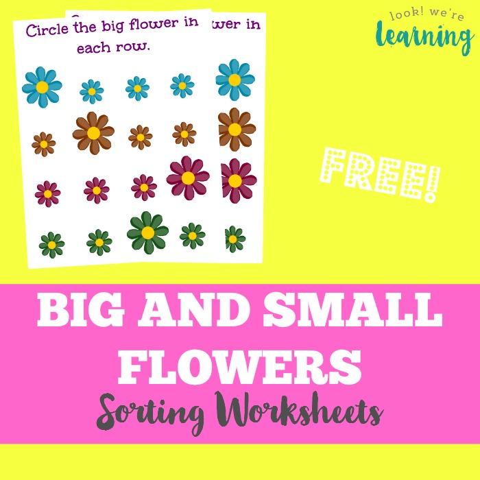 Flower Size Sorting Printables Look Were Learning – Spring Worksheets