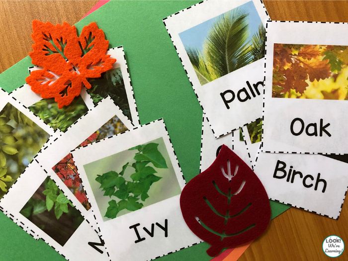 Realistic Leaf Identification Cards