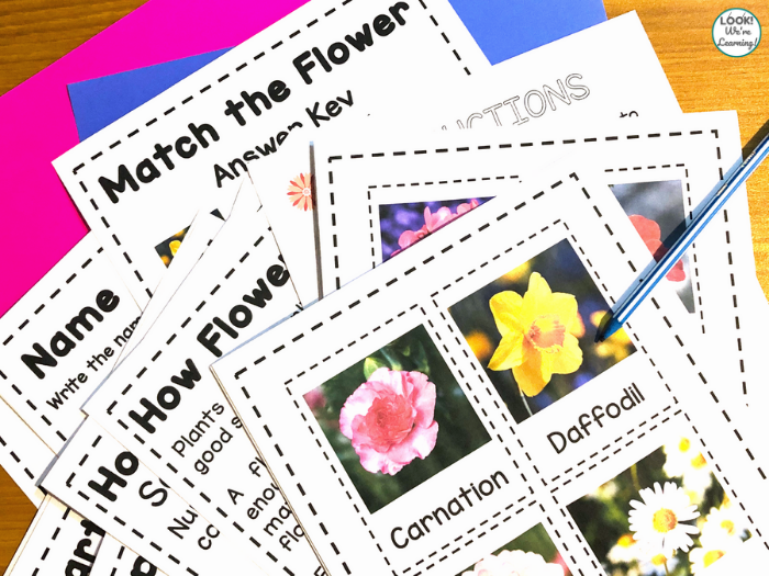 Flower Printables for Kids in Early Grades