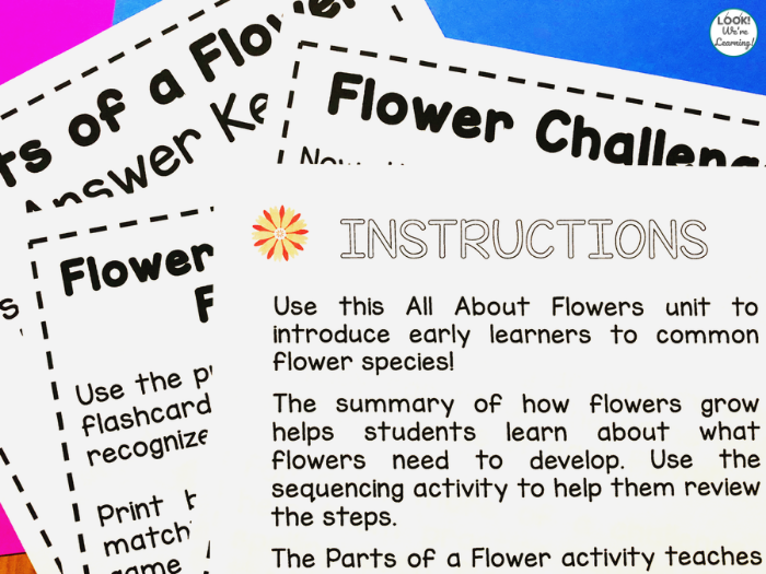 Flower Theme Activities for Early Grades
