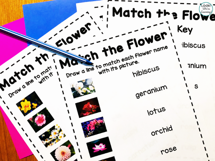Learning about Flowers for Early Grades